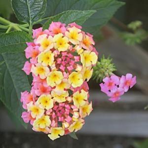 【小さな花】が咲いていました