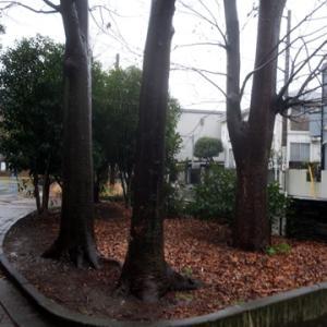 【冷たい雨の公園】でありました。