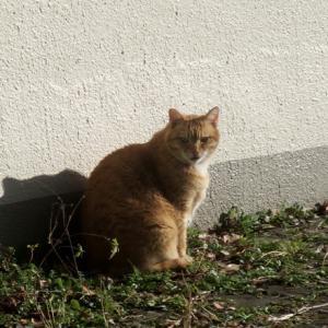 【日向ぼっこしていた猫】がいました。