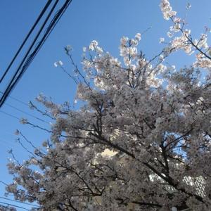 【青い空に桜の花】が切れでしたね。