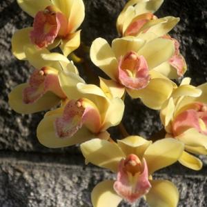 【黄色い花】がいろいろと咲いていました。