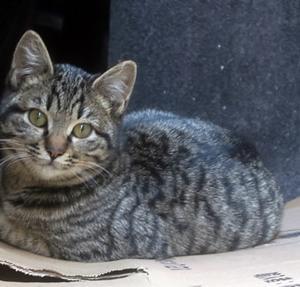 【小さな猫がちょこんと】座ってました
