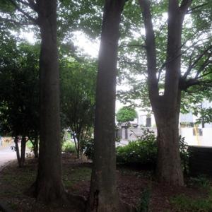 【うす暗い公園】でありました。