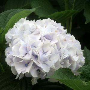 【湿った空気を喜ぶかのような花たち】が咲いていました。