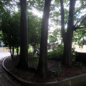 【雨の名残りが残る公園】そんな中で出会ったのは・・・