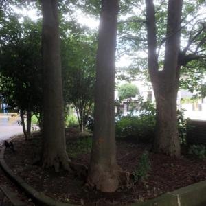 【雨の跡が残る公園】でありました。