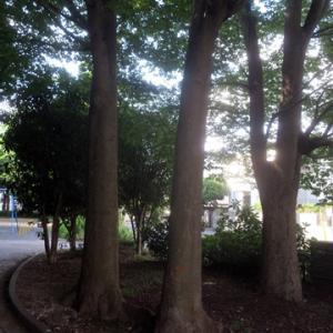 【爽やかな感じの公園】になりました。