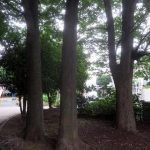 【セミの声はするけれど・・・・】案外涼しく感じる公園でした