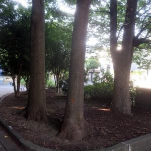 【木陰がうれしい公園】でありました。