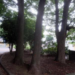 【暗い感じの公園】でありました。
