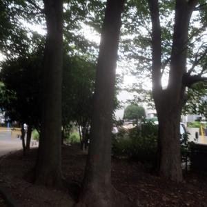 【どんよりした中風の吹き抜ける公園】でありました。