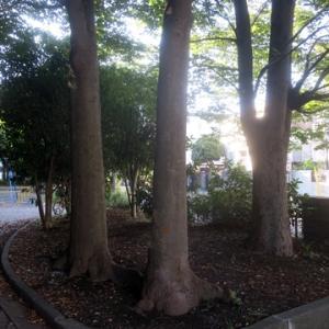 【木漏れ日も心地いい公園】でありました。