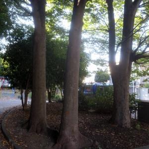 【何とも気持ちいい公園】でありました。