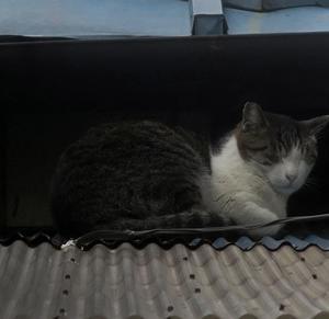 【屋根の隙間に隠れていた猫】がいました