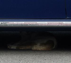【クルマの下に隠れていた猫】がいました。