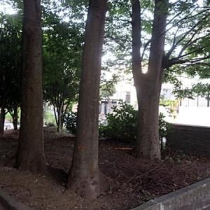 【蒸し暑い中セミの声だけが聞こえる公園】でありました。