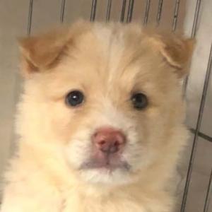2019年10月アグリドッグレスキュー譲渡会参加犬