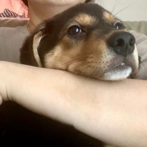 MIX子犬の男の子  ウーロンくん