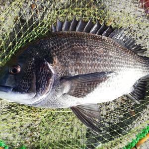 24日のリザルト【春っぽい日差しの中乗っ込みの魚を狙う】