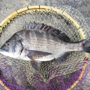 20日のリザルト【今シーズン紀州釣りの開幕。ヌカの感触を思い出す】