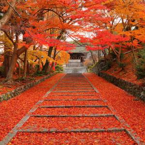秋の京都に行きたいね。目と鼻の先なんだけどね