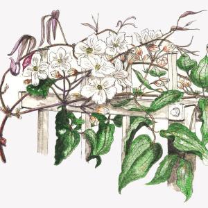 桜も、庭の花も