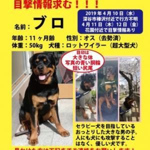埼玉県深谷市で黒茶の大型犬迷子です