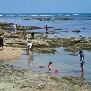 夏休みに人気 潮だまりで海の生き物を捕まえよう 御前埼灯台下の磯 (静岡県御前崎市御前崎)