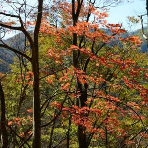 新潟県の紅葉・・2