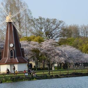 浮間公園の桜・・1