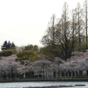 浮間公園の桜・・2