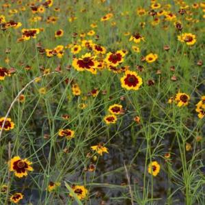 荒川河川敷の花・・2