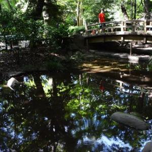 名主の滝公園・・3