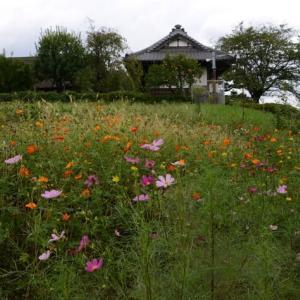 足立区 都市農業公園