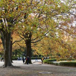 国営昭和記念公園の紅葉・・2