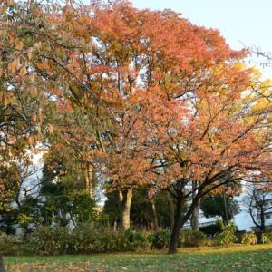浮間公園の紅葉・・2