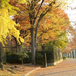 浮間公園の紅葉・・1