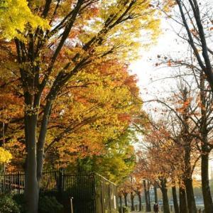 浮間公園の紅葉・・3