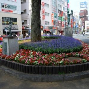 JR赤羽駅前の花壇・・1
