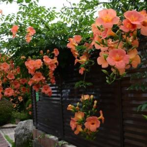 垣根の花壇