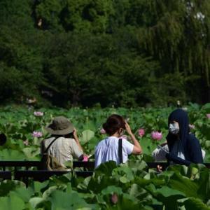 上野不忍池の蓮の花・・4