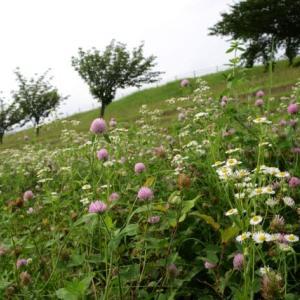 荒川土手の花