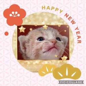 Happy New Year 2021 🐾
