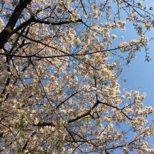 千葉から春の便り