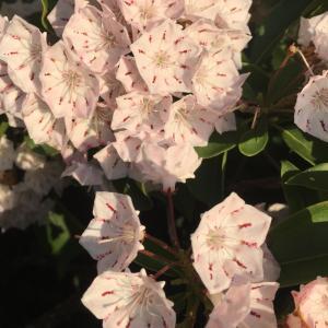 在宅46日目_3 散歩道の花