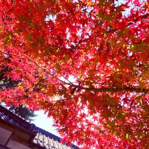 開運photoメッセージ365(11/18)