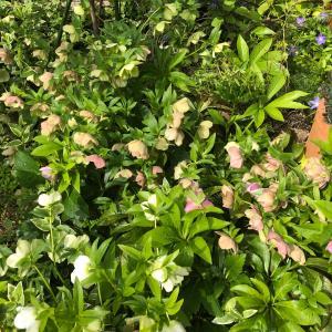 庭のお花たち