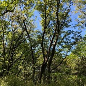 緑の木々と青い空