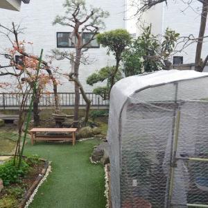 ☆★1/24日、久しぶりに庭に出てみました。ちっちゃな春をみつけました。部屋の中の植物も元気★☆