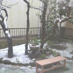 ☆★季節外れの大雪、東京の感染者数がまた増えています。困ったものです。★☆